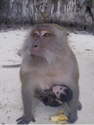 Monkey Mama and Monkey Baby