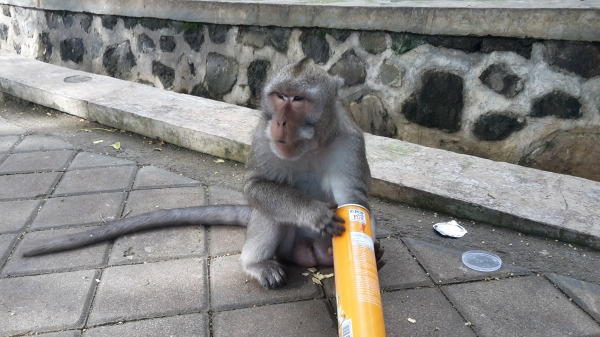 This monkey stole my sunglasses right after eating pringles #noshame... Bali, Indonesia